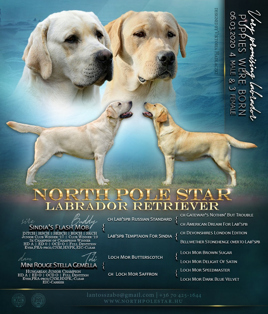 north pole star puppies